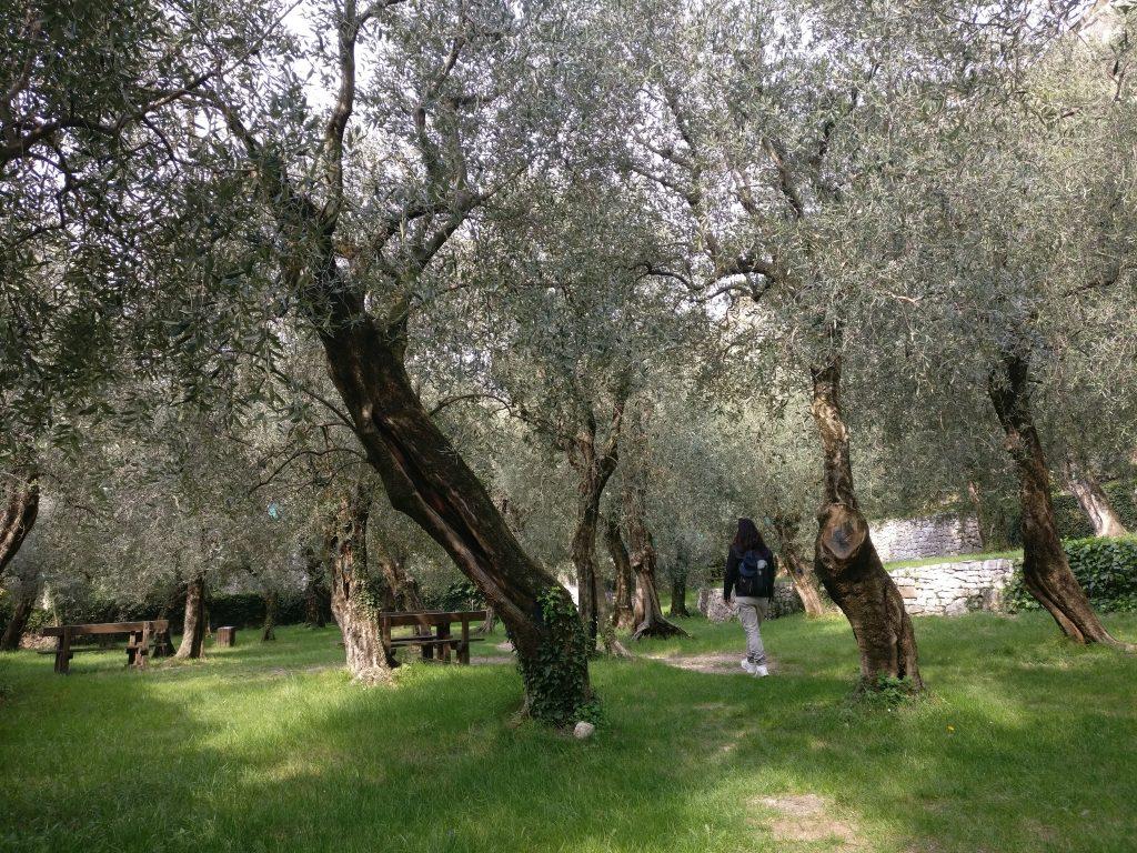 parco degli ulivi Torbole