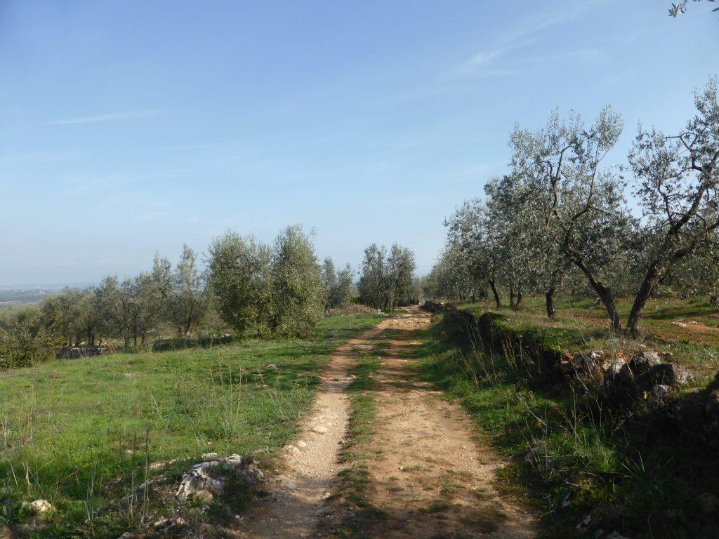 via-francigena-oliveti