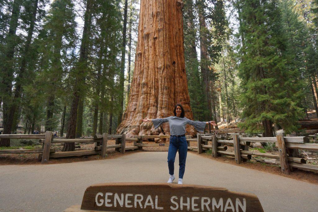sequoia-general-sherman-tree