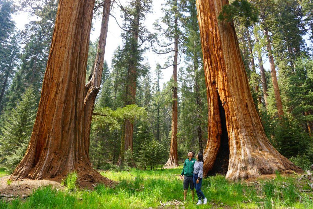 sequoia-national-park
