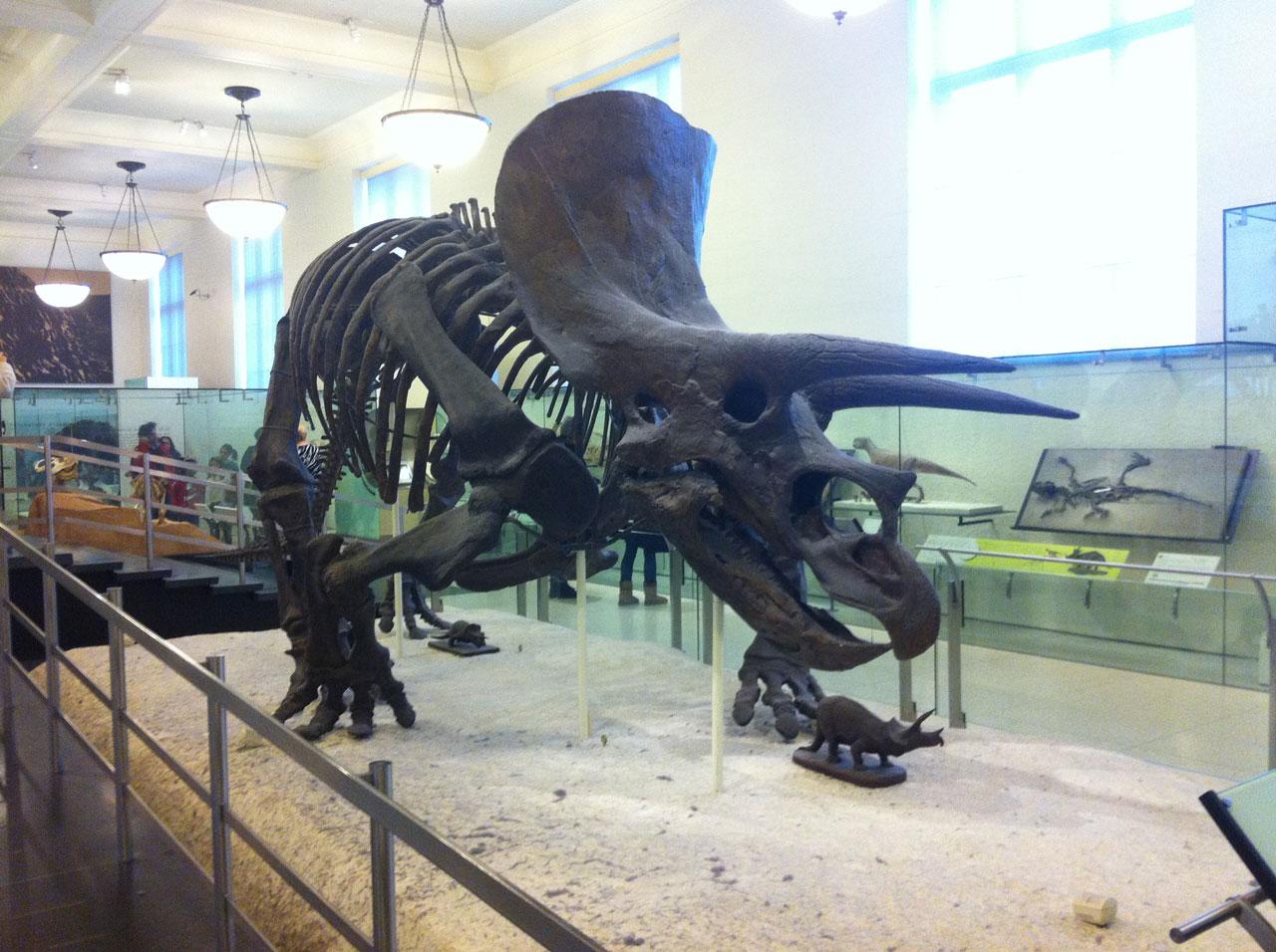 new-york-museo-storia-naturale