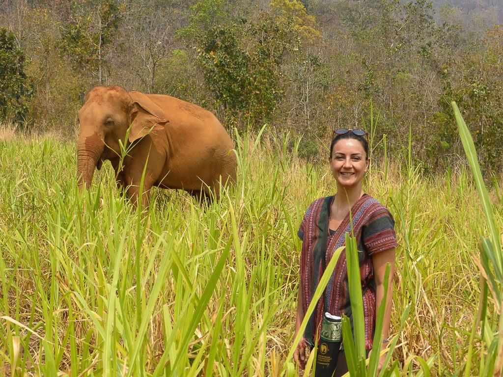 elefanti-thailandia