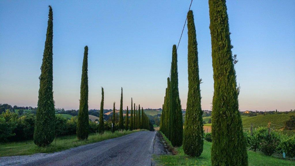 strada con cipressi